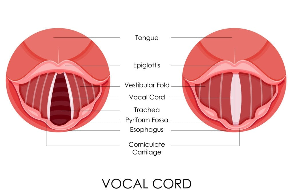 Vocal Cords-Glidescope